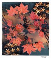 Maple Leaves In The Fall - Pencil And Paper Printmaking - By Anna Helena Fisher, Collage Printmaking Artist