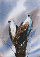 My Gallary - Eagle - Water Colour