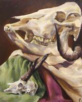 Still Life - Skull Study - Acrylic On Canvas