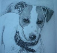 Drawings - Maggie - Pencil  Graphite