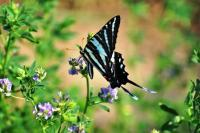 Butterflies - Earthly Delight - Digital Photography By Heather