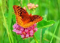Butterflies - Mmmmmm Breakfast - Digital Photography By Micah