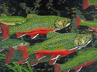 Brook Trout Art Prints Fish Art Fine Art Prints Giclee - Fine Art Prints From Original Paintings - By Baslee Troutman Fine Art Prints Fish Flowers, Contemporary Fine Art Prints Painting Artist