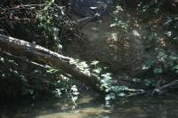 Photography - Creek - Digital Camera