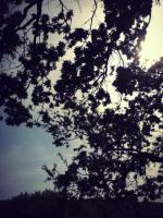 Photography - Tree Branches - Digital Camera