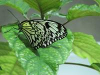 Photography - Butterfly - Digital Camera