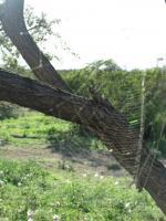Photography - Spider Web - Digital Camera