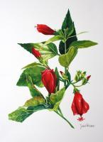 Firecracker Hibiscus - Watercolour Paintings - By Julia Patience, Realism Painting Artist