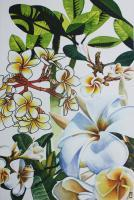 Studies Of Frangipani - Watercolour And Ink Paintings - By Julia Patience, Realism Painting Artist
