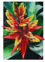 Flower Paintings - Heliconia - Watercolour And Ink