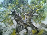 Nature - Olive Tree - Gouache