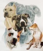 American Staffordshire Terrier - Watercolor Enhanced Colored Pe Mixed Media - By Barbara Keith, Realism Mixed Media Artist