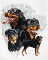Ghost Series Animals - Rottweiler - Watercolor Enhanced Colored Pe