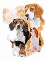 Beagle With Ghost Image - Watercolor Enhanced Colored Pe Mixed Media - By Barbara Keith, Realism Mixed Media Artist