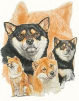 Ghost Series Animals - Shiba Inu With Ghost Image - Watercolor Enhanced Colored Pe