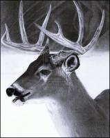 Pencil Drawings Of Animals - Pencil Drawing Of A Deer - Pencil  Paper