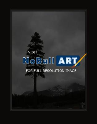 Photography - Lone Pine At Mt Shasta - Digital