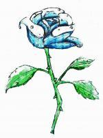 Pencil Photoshop - Blue Rose - Photoshop