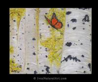 Butterflies - My Backyard - Acrylic On Canvas
