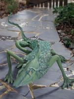Cement - Iguana - Cement Steel Glass