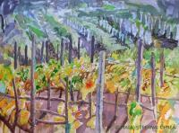 Landscape - Vineyard III - Watercolor On Paper