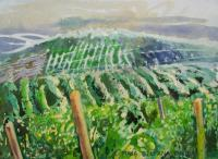 Landscape - Vineyard I - Watercolor On Paper