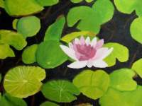Amateurpainter - Water Lilies - Oil On Canvas