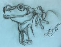 Wild Life - Ready To Leap - Pencil  Paper