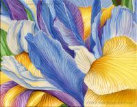 Iris - Acrylic On Canvas Paintings - By Jane Girardot, Realism Painting Artist