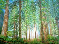 Coastal Redwoods - Acrylic On Canvas Paintings - By Jane Girardot, Realism Painting Artist