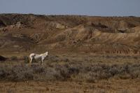 Horses - Wild Horse In The Badlands - Digital