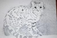 Pen And Ink Drawings - Housecat - Pen And Ink