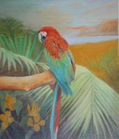 Animals - Macaw - Oil Paint