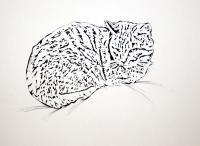 Pen And Ink Drawings - Resting Cat - Pen And Ink