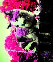Edited Images - Cat Going Up A Wall - Photoshop