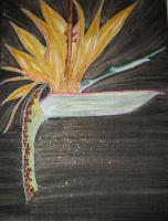 Eeman Art Gallery - Decorated Bird Of Paradise - Indian Ink Watercolor Mixed Me