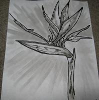 Eeman Art Gallery - Bird Of Paradise Blackwhite - Indian Ink