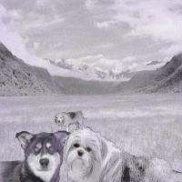 Dog Collage - Three Dogs On A Mountain Adventure - Photoshop