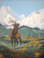 Colorado Wildlife - Royal Decree - Acrylic On Canvas