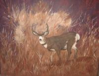 Colorado Wildlife - Deep Cover - Acrylic On Masonite