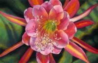 Floral - Cactus Flower - Watercolor