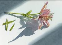 Floral - Lilies - Watercolor