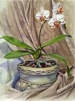 Floral - Sunny Face Moth Orchid - Watercolor
