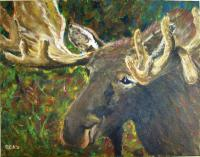 Wildlife - Moose Study - Acrylic