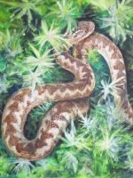 Fine Art - Adder In The Sun - Acrylics On Canvas