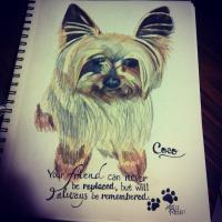 Coco - Colored Pencil Drawings - By Karlee Patton, Animal Life Drawing Artist