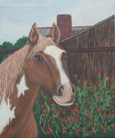 Horse - Tbd - Acrylic On Canvas
