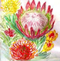 Floral Watercolour - Protea Greeting Card - Water Colour