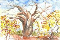 Arboreal Landscape - Baobab Tree Of Africa - Water Colour