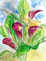 Floral Watercolour - Magenta Lilies - Water Colour